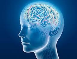 10 راز جالب درباره مغز
