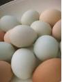 تخم مرغ های بومی بهتر است یا تخم مرغ های سفید