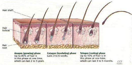 ده تذکر مهم برای جلوگیری از ریزش موی سر
