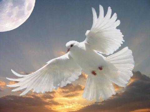 پیرترین کبوتر دنیا+تصویر