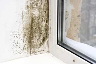 بیماری های ناشی از کپک داخل خانه