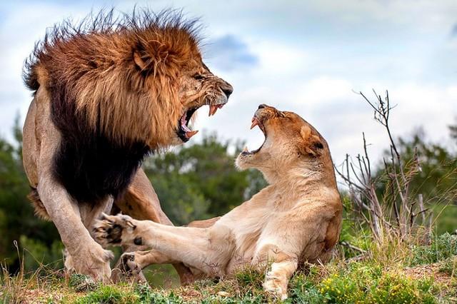 دعوای خانوادگی حیوانات