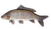 نحوه انتخاب ماهی سالم و مصرف آن