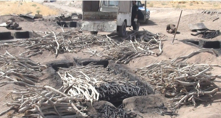 قاچاقچیان ماموران محیط زیست را زخمی کردند